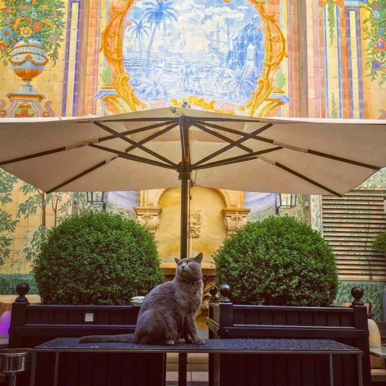 Hotel Castille Paris_Heliot in our patio