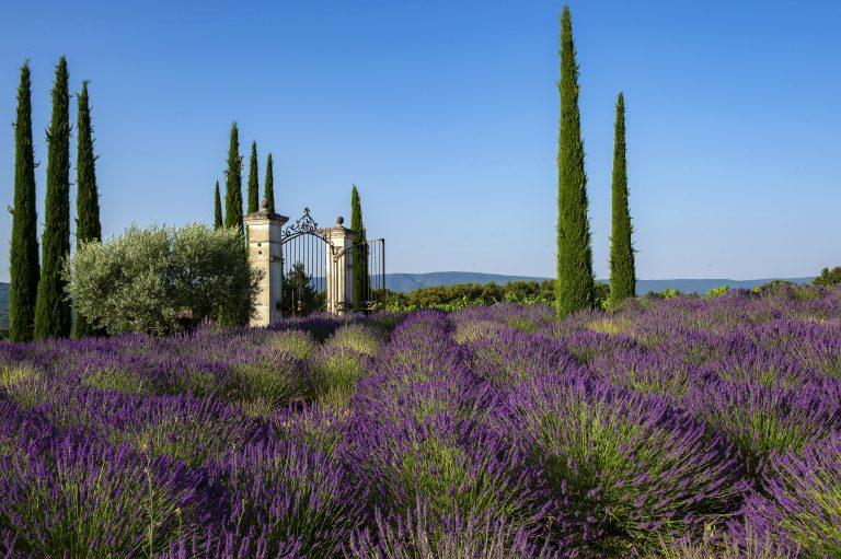 La Coquillade_Gates & Lavenders for Gazette